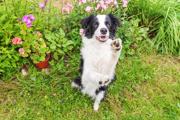 Outdoor ritratto di cucciolo border collie seduto su erba sfondo fiore