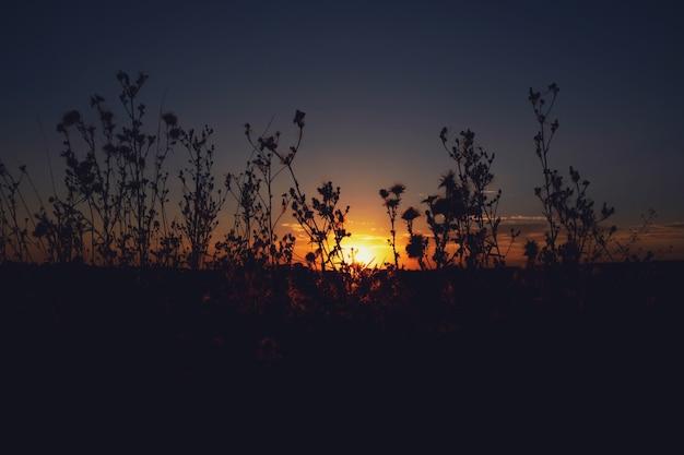 Il profilo di un fiore su un tramonto estivo soleggiato
