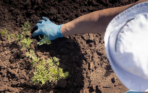 Sovraccarico dell'agricoltore in cappello che lavora la terra e rimuove le erbacce con la mano nel guanto agricoltura biologica c...