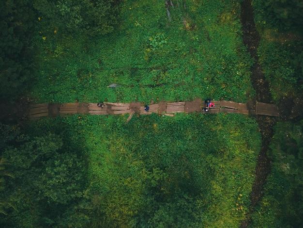 Vista dall'alto del sentiero nel concetto di escursione nella foresta