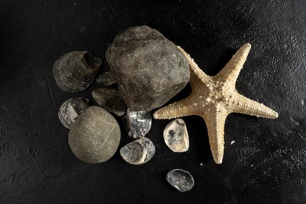 Gusci di ostriche, stelle marine e pietre su uno sfondo nero.
