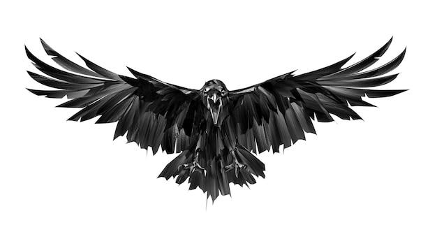 Dipinto su uno sfondo bianco uccello corvo in vista frontale d'attacco