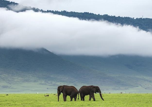 Coppia di elefanti nel cratere di ngorongoro