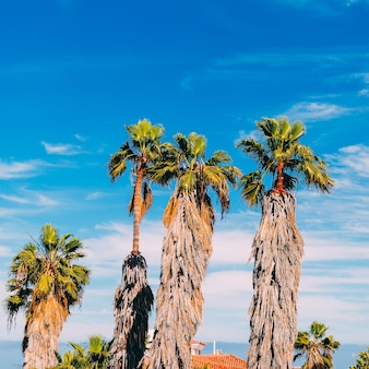 Palma. umore di moda da spiaggia. canarie