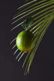 Ramo di palma e lime verde con un gambo