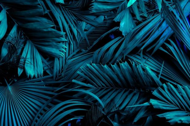 Foglie verdi di palma o cocco con sfondo di toni scuri o motivi di foreste di pini tropicali a foglia verde