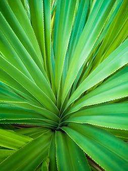 Struttura della pianta del fondo delle foglie tropicali verdi della palma.