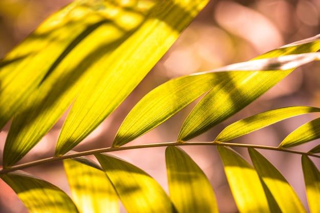 Foglia di palma nella giungla sulla natura
