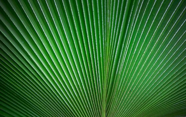Natura del fondo di struttura della foglia di palma