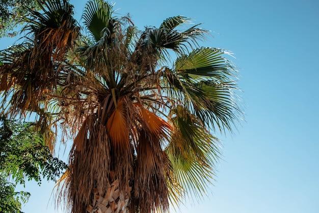 Foglie di palma contro il primo piano del cielo. il concetto di destinazioni turistiche e viaggi in paesi caldi. foto di alta qualità