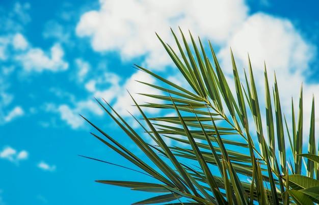 Foglie di palma contro il cielo messa a fuoco selettiva