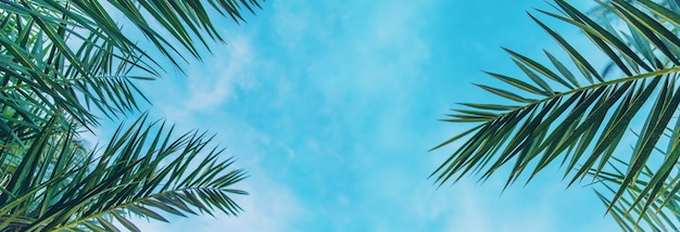 Foglie di palma contro il cielo