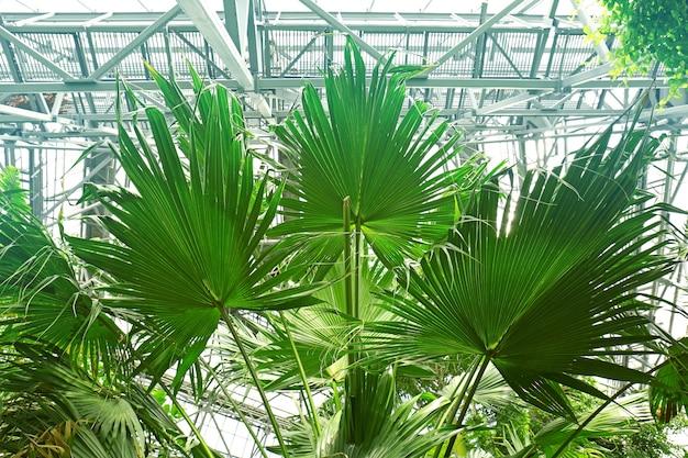 Foglie di palma in giardino botanico