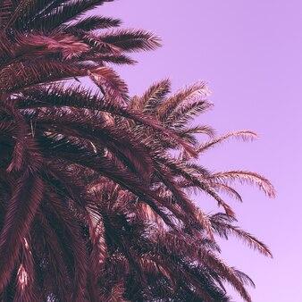 Foglie di palma. sfondo di moda. dettagli artistici minimi