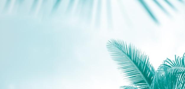 Foglie di palma su un modello tonico di sfondo azzurro-verde chiaro per il panorama del testo con spazio di copia