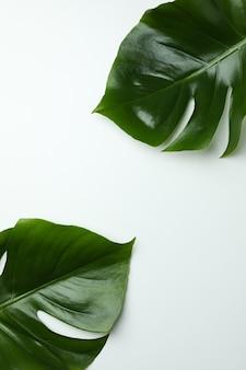 Foglie di palma su sfondo bianco isolato, spazio per il testo
