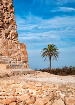 Una palma sullo sfondo del cielo blu e antiche strutture in pietra.