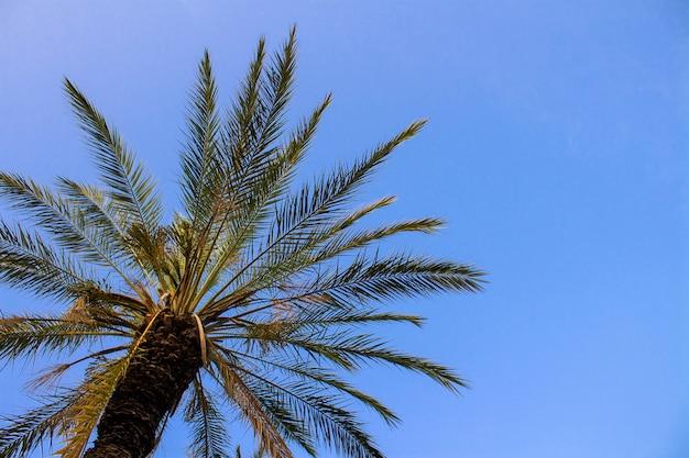 Palma contro il cielo blu.