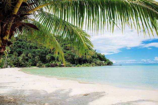 Palma sulla spiaggia in mare con lo sfondo del cielo blu.