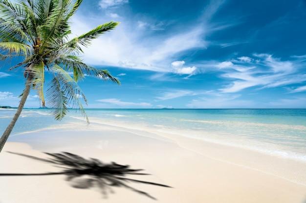 Palma sulla spiaggia con mare blu turchese con sabbia bianca e cielo soleggiato