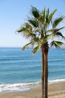 Palma sulla spiaggia Foto Premium