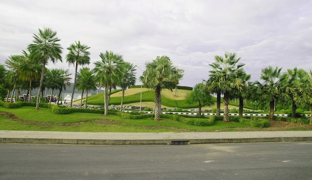 Giardino di palme