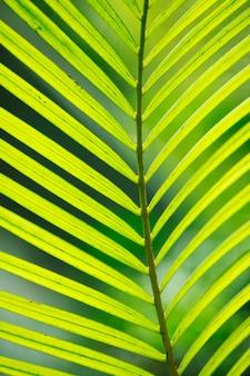 Foglia di palma al primo piano di luce solare