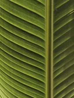 Trama di foglie di palma. bella natura tropicale esotica estiva
