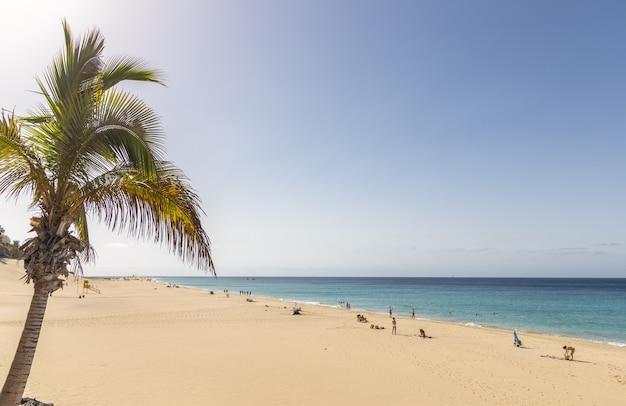 Palma sulla spiaggia di morrojable a fuerteventura, isole canarie, spain