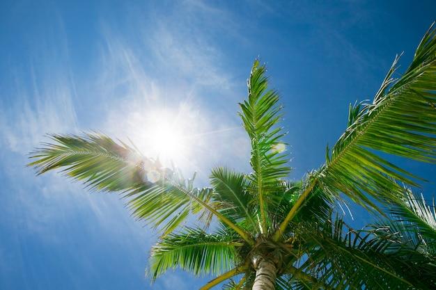 Palme contro il cielo blu. palme sulla costa tropicale
