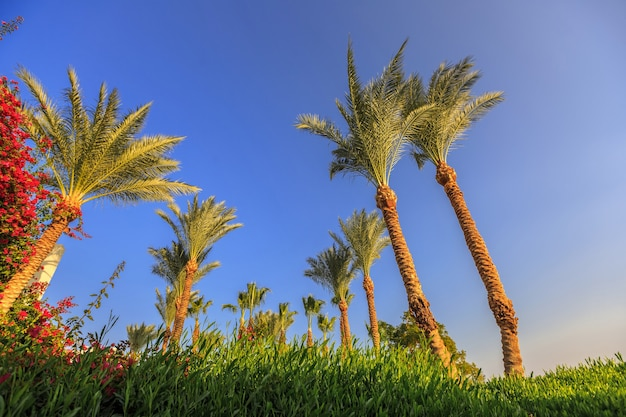 Palme sullo sfondo del cielo blu