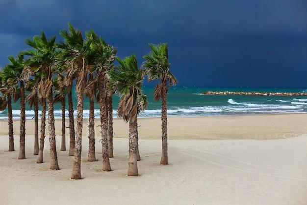 Palme sulla spiaggia sul mare sul cielo blu scuro della regolazione