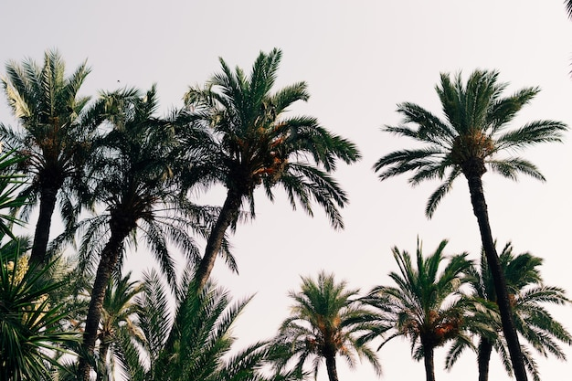 Palme su uno sfondo di cielo blu