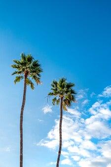 Palme. moda, viaggi, estate, vacanze e concetto di spiaggia tropicale.