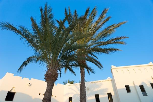 Palme in hotel con case bianche in stile arabo sullo sfondo in una giornata estiva