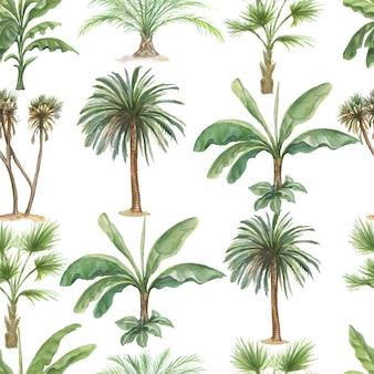 Illustrazione disegnata a mano dell'acquerello della palma della banana delle piante della giungla delle palme