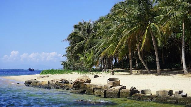 Palme e mare. giorno d'estate. spiaggia deserta abbandonata con pietre.
