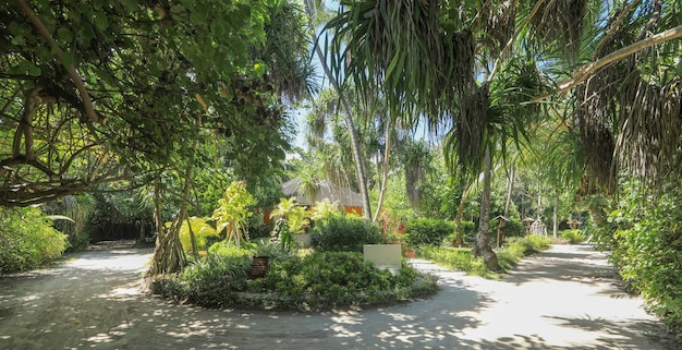 Palme su un'isola tropicale