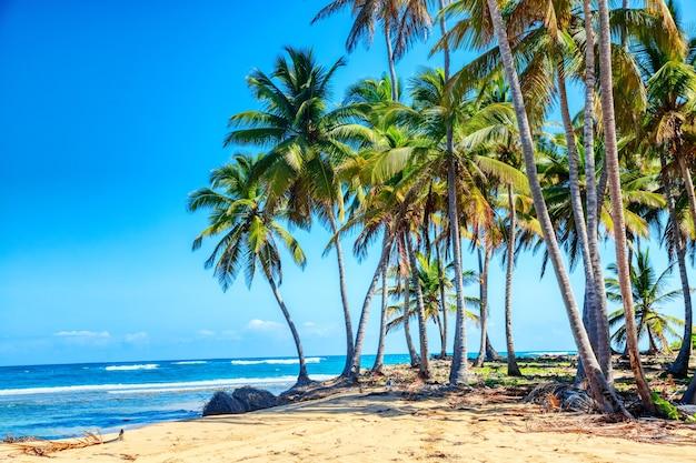 Palme sulla spiaggia tropicale selvaggia nella repubblica dominicana.