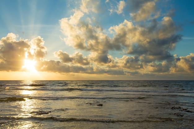 Palme e spiaggia tropicale