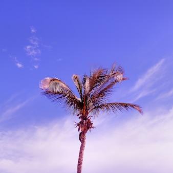 Palma. vibrazioni alla moda tropicale. canarie
