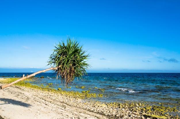 Palma ma lo sfondo di mare azzurro e sabbia bianca e sassi, filippine