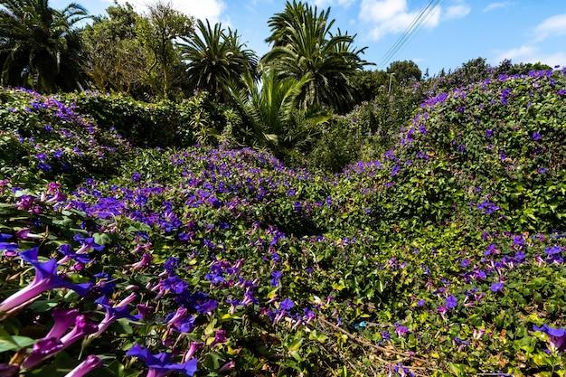 Palmeras y flores en santa cruz de tenerife espa a frica. viaggi turismo fotografia di strada.