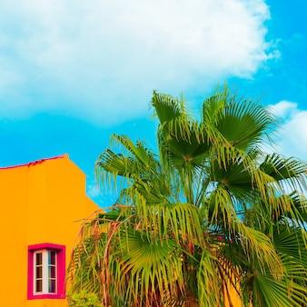Palms isole canarie vibrazioni di viaggio