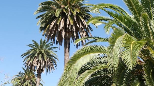 Palme a los angeles, california, usa. santa monica o venice beach. cielo azzurro e palme.
