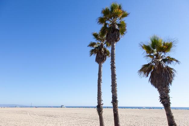 Palme sulla spiaggia di santa monica - los angeles - durante una giornata di sole con un cielo azzurro perfetto