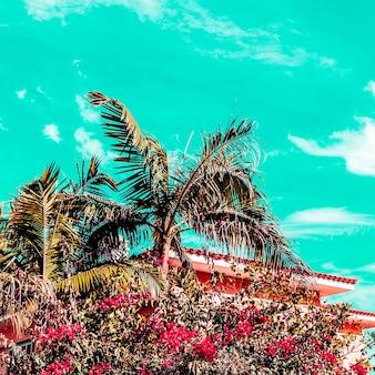 Vibrazioni tropicali delle palme. isole canarie. atmosfera da viaggio alla moda