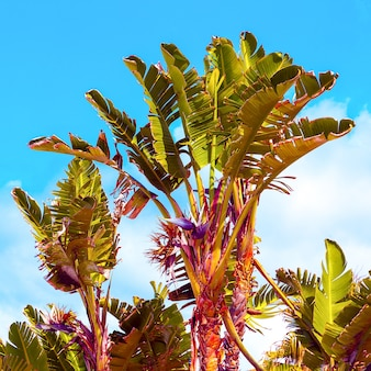 Palms tropics isole canarie