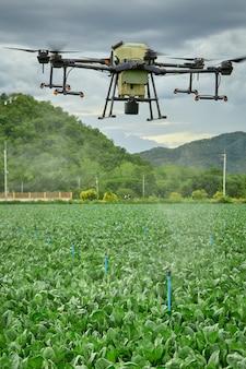 Il drone agricolo panoramico vola al fertilizzante spruzzato sul campo di cavolo riccio, l'agricoltore intelligente usa la tecnologia intelligente dei droni