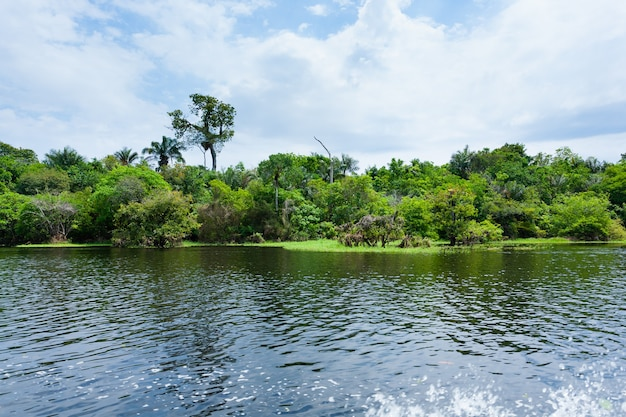 Panorama dalla foresta pluviale amazzonica, regione delle zone umide brasiliane. laguna navigabile. punto di riferimento del sud america